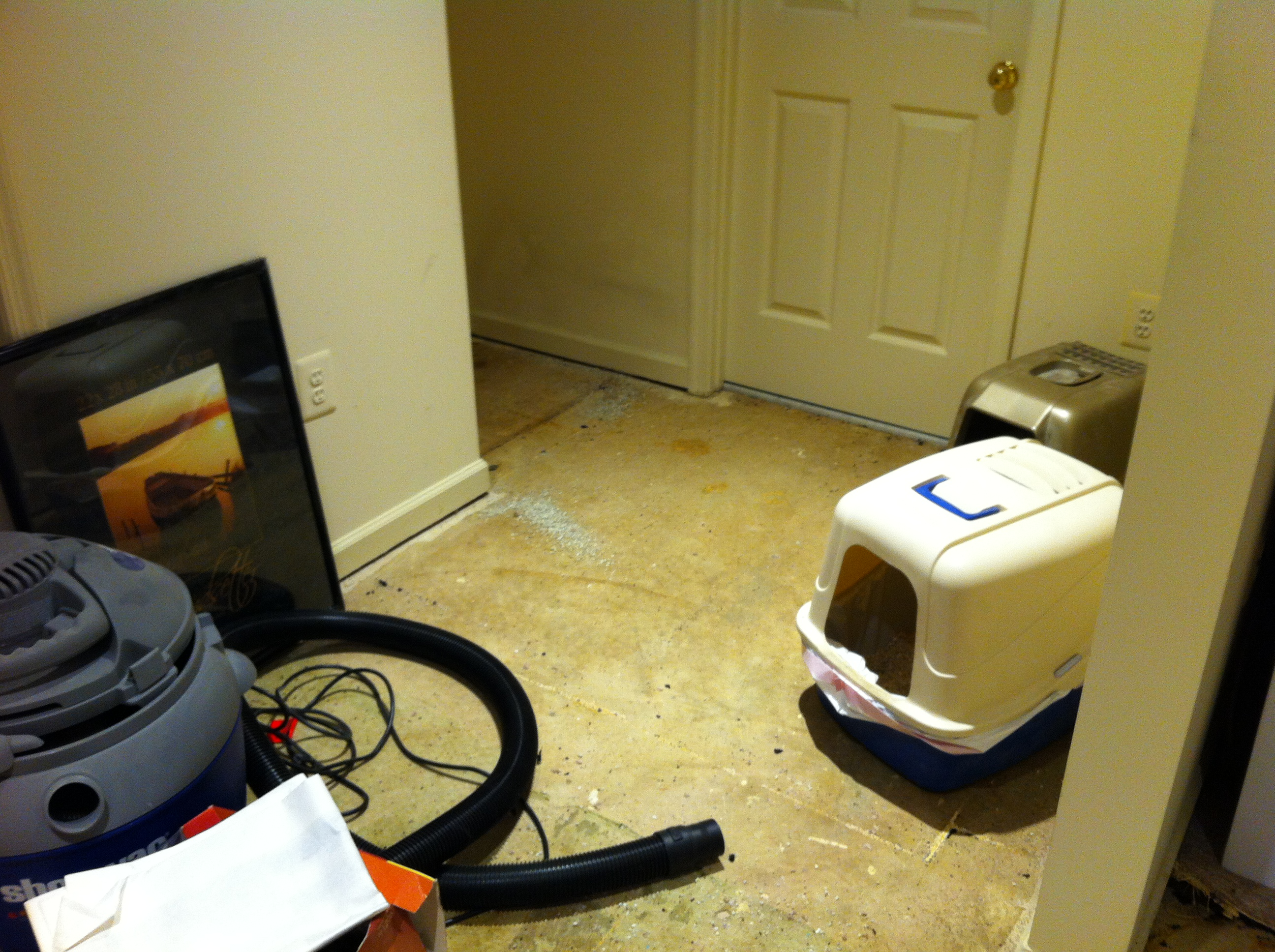"The ""cat"" corner.  The carpet is gone, but the glue remains"